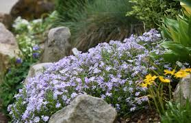 rock garden at the national aviary is a tapestry of texture and