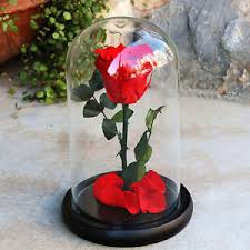 rose in glass forever rose flower festive preserved immortal fresh rose in glass