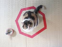 Cat Trap Meme - how to trap a cat cat circles meow aum