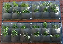 Vertical Wall Garden Plants by Home Vertical Veg