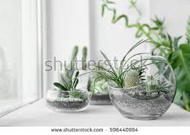 terrarium stock images royalty free images u0026 vectors shutterstock