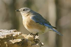 Nc Backyard Birds Guidebook Provides An Overview Of Birds In The Lehigh Valley
