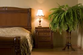 climbing houseplants to grow indoors interior decorating with