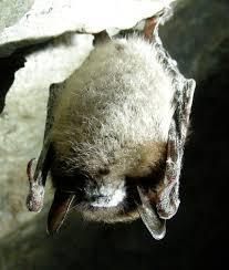bats the epa blog