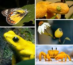 butter living 10 amazing yellow animals webecoist