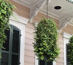 things you didn u0027t know about english ivy plants
