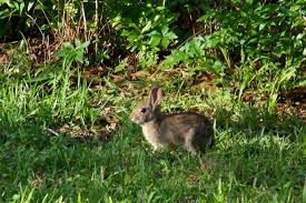 our nature rabbit