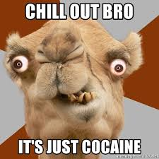 Chill Out Bro Meme - chill out bro it s just cocaine crazy camel lol meme generator