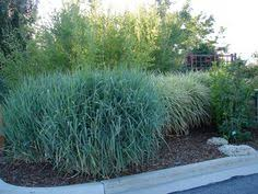 new utah gardener the most drought tolerant waterwise ornamental