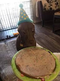 Birthday Cake Dog Meme - my friends dog very excited about her birthday cake meme guy