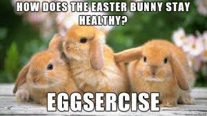 Cute Easter Meme - funny easter jokes happy easter 2018