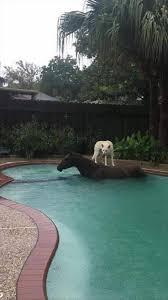 dog on a horse in a pool kool 102 60s 70s and more las