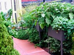 container vegetable gardening do these five things