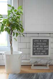 Home Interior Plants by 5 House Plants That Do Better Being Left Alone Nesting With Grace