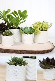 Cute Succulent Pots 10 Fun Diy Projects With Succulent Plants