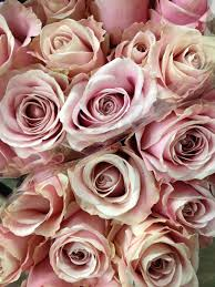 Delivery Flower Service - pink u0027 avalanche rose sold in bunches of 20 stems from the