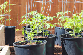Container Gardening Peas - bubby and bean living creatively 10 tips for container