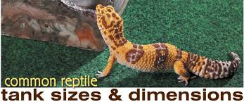 reptile habitats choosing an enclosure for your herp common