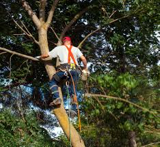 tree pruning professionals guide homeowners on the best time to