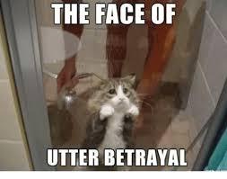 Grumpy Face Meme - the face of utter betrayal grumpy cat meme on sizzle