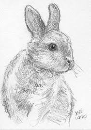 best photos of bunny rabbit sketches pencil sketch bunny rabbit
