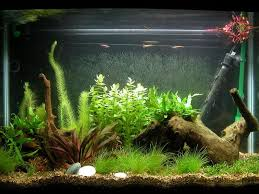 diy fish tank ideas the home decor ideas