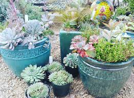 Succulent And Cacti Pictures Gallery Garden Design 21 Succulent Garden Designs Garden Designs Design Trends