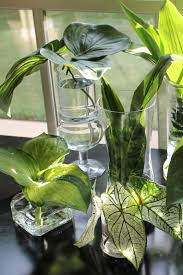 Glass Vases For Weddings Hosta Leaves And Other Greenery In Glass Vases For
