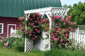 white garden arbor with climbing plants outdoor amazing garden