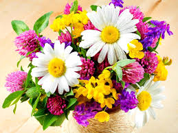 fresh flowers photo collection colourful fresh flowers hd