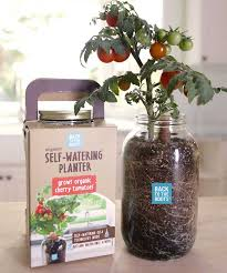How To Make A Self Watering Planter by Self Watering Planters Let You Grow Your Own Cherry Tomatoes Indoors