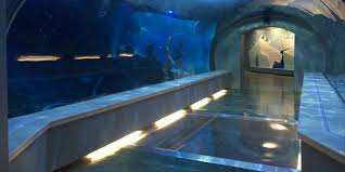 Detroit Zoo Night Lights by Detroit Zoo Gives 1st Look Inside New Penguinarium