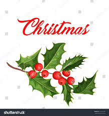 vector realistic hand drawn holly ilex stock vector 711019138