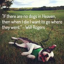 when a pet dies 13 dog loss quotes comforting words when losing a friend