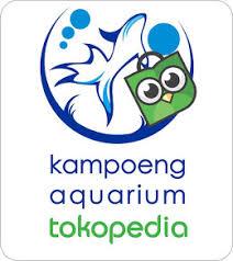 membuat aquascape bening cara membuat air aquascape aquarium bening aquascape indonesia