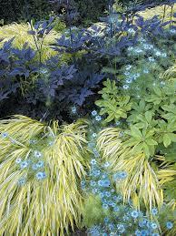 updating an historic garden nigella perennials and grasses