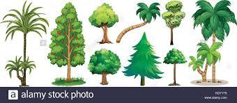 different types of trees different types of trees illustration stock vector art