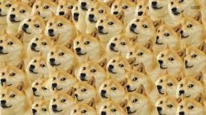 What Breed Is Doge Meme - wallpaper face memes doge nose cheetah vertebrate dog like