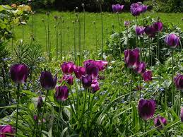 9 beautiful landscaping bulbs images