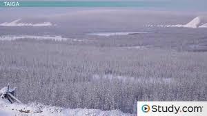 Russian Boreal Forest Disturbance Maps by Biomes Tundra Taiga Temperate Grassland And Coastlines Video