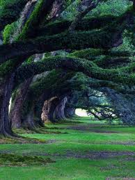 11 best trees images on a tree crop field and garden