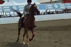 New England Morgan Horse Show Northampton Ma New England Nomad