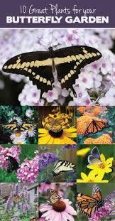 super easy butterfly feeder garden pinterest super easy