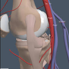 Borders Of The Heart Anatomy Imbus Home