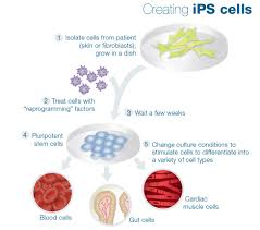 stem cell quick reference