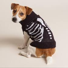 Dog Skeleton Halloween Wag And Bear It Dressing Your Dogs For Halloween Success
