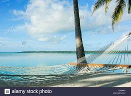 white string hammock in tropical setting of the cook islands stock