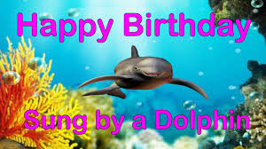 birthdays happy birthday song funny version sung by a dolphin