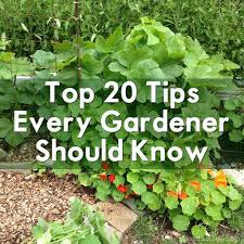 homely ideas gardening tips magnificent productive vegetable for