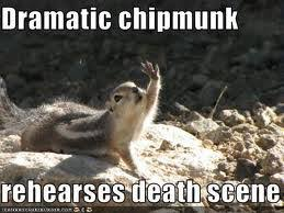 Dramatic Squirrel Meme - overly dramatic squirrel more information